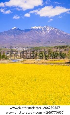 Viol domaine montagnes scénique paysage tracteur Photo stock © ldambies