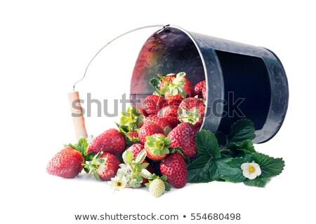 Strawberries Spilled from Bucket Stock photo © zhekos