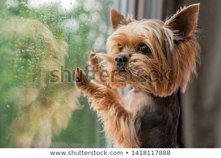ждет окна красивая женщина женщину девушки домой Сток-фото © Spectral
