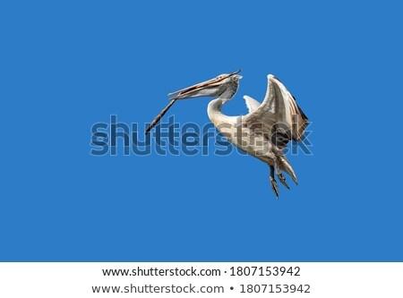 fehér · madár · fű · állat - stock fotó © taden