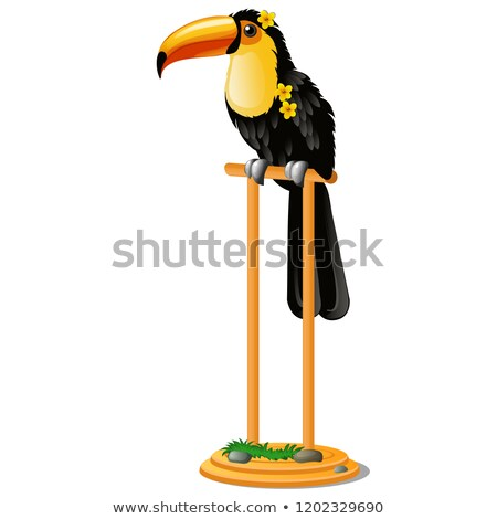 Beautiful bird toucan sitting on a wooden perch isolated on white background. Vector cartoon close-u Stock photo © Lady-Luck