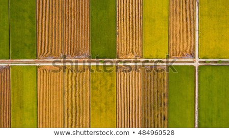 Stock photo: Aerial top view photo from flying drone of green rice fields in countryside Land with grown plants o