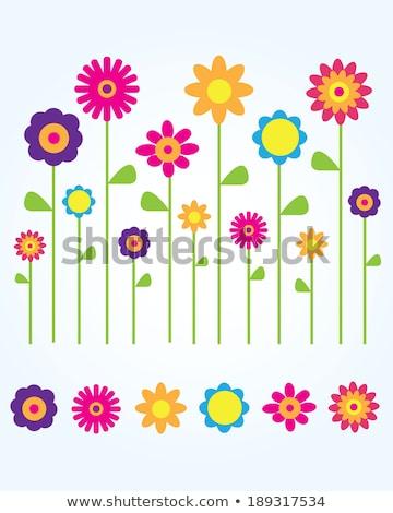 Tulipán icono verde círculo flor naturaleza Foto stock © Imaagio
