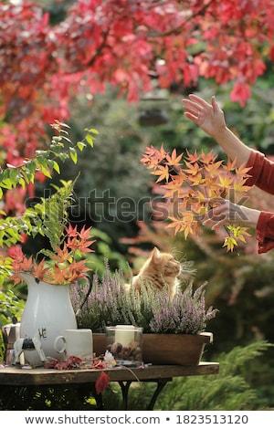 heather bush on wooden table Stock photo © dolgachov