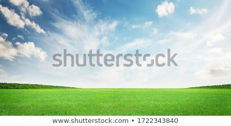 Stock fotó: Gyönyörű · erdő · mező · kék · ég · fa · természet