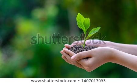 Női kezek tart fiatal palánta fény Stock fotó © rufous