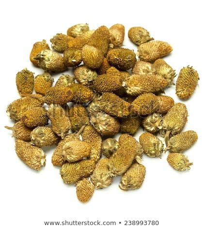 Splinthes Acemella or Yellow Akarkara Seeds Stock photo © ziprashantzi