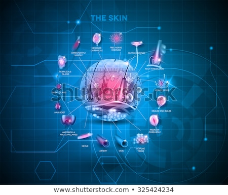 skin anatomy detailed structure abstract blue backdrop design stock photo © tefi
