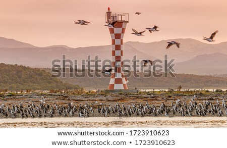 Lighthouse and animals Stock photo © colematt