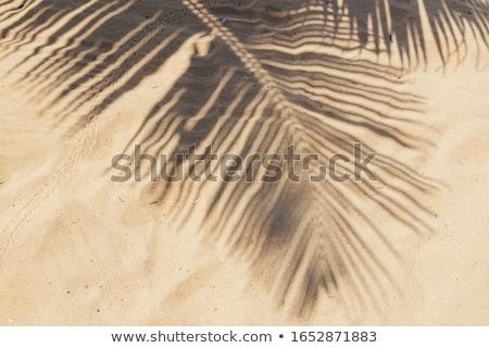 Zomer vakantie zand palmbladeren strand star Stockfoto © mythja