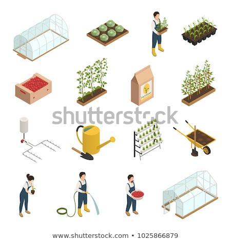 Spray roślin narzędzie izometryczny ikona wektora Zdjęcia stock © pikepicture