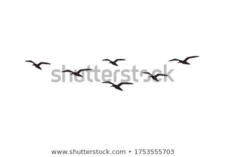 group of seagulls stock photo © witthaya