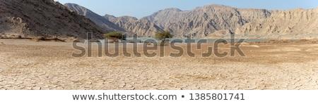 Czarny pęknięty ziemi powodzi krajobraz lata Zdjęcia stock © mycola