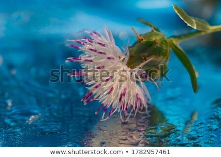 Cactus plant water reflectie ondiep Stockfoto © Lizard