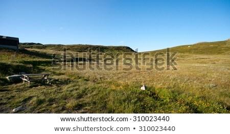 Mountain plateau Valdresflye, Jotunheimen, Norway Stock photo © slunicko