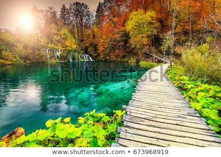 Stock fotó: Fából · készült · turista · út · víz · fa · út