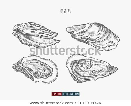 устрица изолированный иллюстрация морепродуктов белый рыбы Сток-фото © ConceptCafe