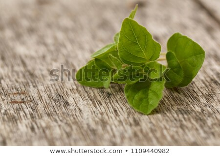 Fresh oregano leaves on a rustic background Stock photo © madeleine_steinbach