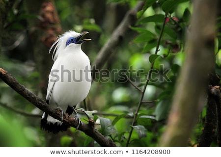 Pássaro exótico branco árvore natureza Foto stock © Juhku