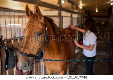 Young female caregiver taking care of young brown racehorse in stable Stock photo © pressmaster