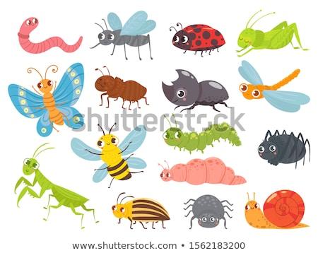 Funny gąsienica owadów komiks zwierząt charakter Zdjęcia stock © izakowski