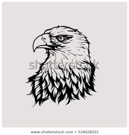 Aquila testa tattoo design logo preda Foto d'archivio © Valeo5