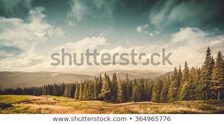 Farmland landscape on a background of cloudy sky. Stock photo © artjazz