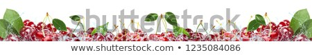 red cherry falling into water and splashing stock photo © pixelchaos