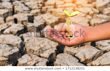 Сток-фото: Hands Soil And Plant Showing Growth