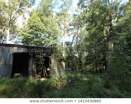 old vintage cabin woods forest abandoned scary barn stock photo © jeremywhat