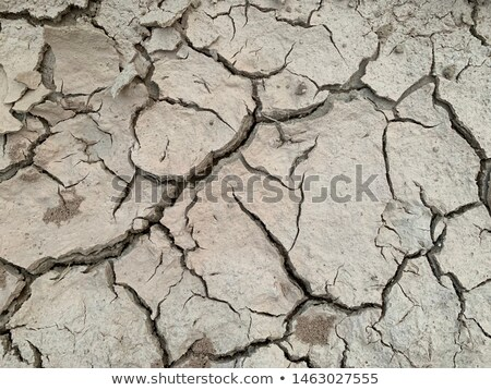 Dry terrain ground using as background Stock photo © vichie81