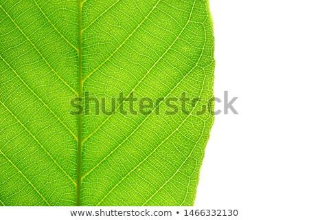 rendkívül · részletes · közelkép · fotó · növény · lomb - stock fotó © mnsanthoshkumar