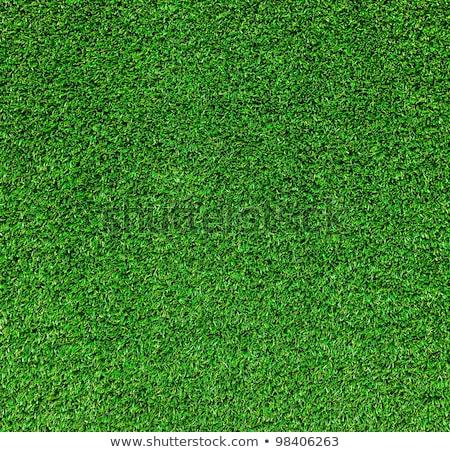 Belo grama verde textura campo de golfe primavera grama Foto stock © ozaiachin