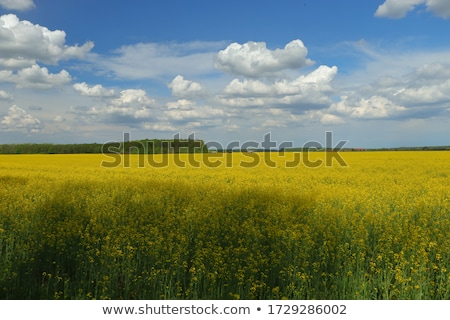 Trillend blauwe hemel prachtig bloem bos natuur Stockfoto © lypnyk2