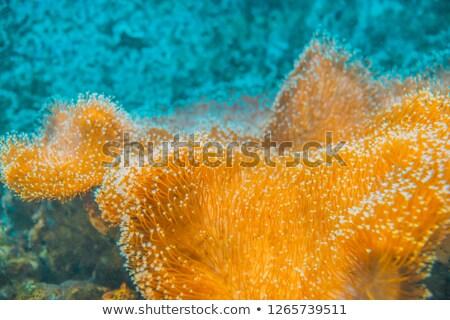 Pęcherzyki wodorost makro wiele mały wewnątrz Zdjęcia stock © smithore