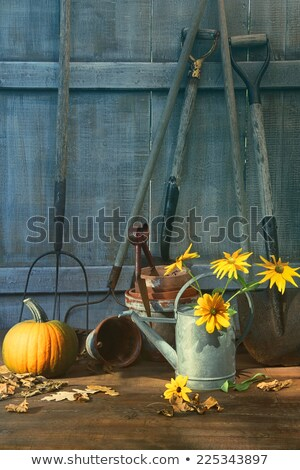 garden shed with tools pumpkin and flowers stock photo © sandralise
