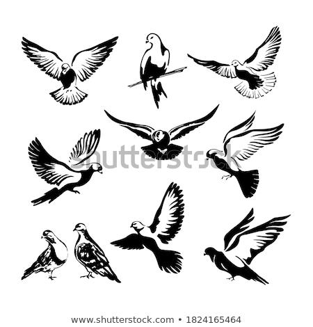 uccelli · seduta · filo · vettore · sfondo - foto d'archivio © hfng