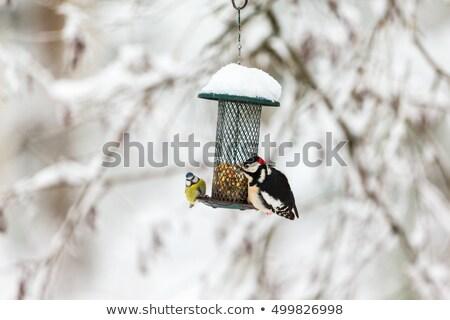 Pássaro floresta alpiste árvores parque mata Foto stock © dbvirago