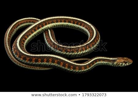 Armband kouseband bruin bloem kant Stockfoto © Forgiss