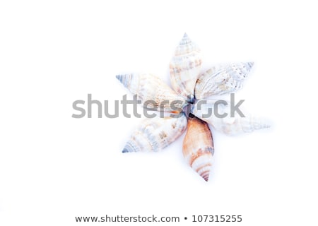 Shellfishes forming a circle against a white background Stock photo © wavebreak_media