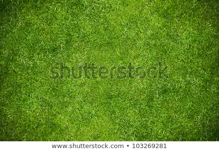 Görmek çim kavramlar doğa arka plan Stok fotoğraf © mtkang