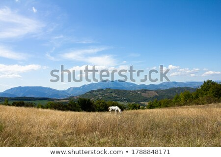 ló · nyár · testtartás · hegyek · gyönyörű · kilátás - stock fotó © kotenko