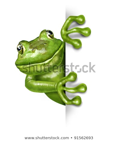 sapo · natureza · verde · animal · ambiente - foto stock © lightsource