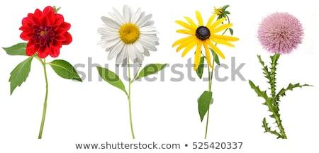 цветочный · стилизованный · цветы · розовый · растений · цветок - Сток-фото © wad