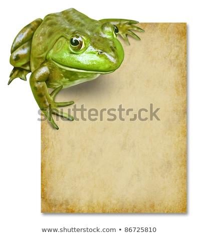 frog with blank grunge old paper sign stock photo © lightsource