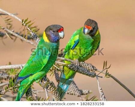 paloma · gris · rústico · aves · mesa · jardín - foto stock © sarahdoow