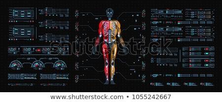 Digitale skelet zichtbaar intern hart Stockfoto © wavebreak_media