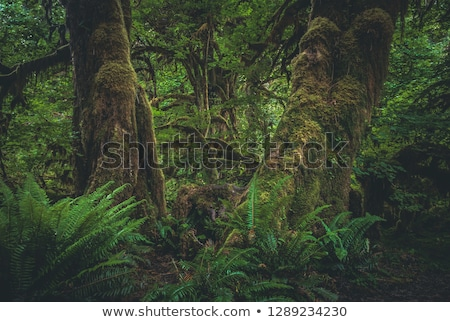 mossy forest stock photo © dinozzaver