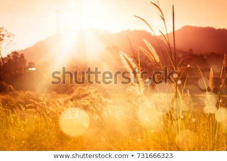 summer evening landscape stock photo © chesterf