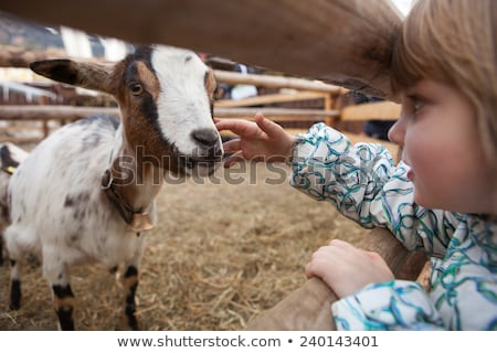goat  in the zoo Stock photo © taden